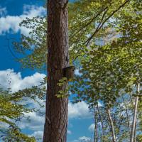 Unser Wald hat mit der zunehmenden Trockenheit zu kämpfen. Wir müssen handeln.